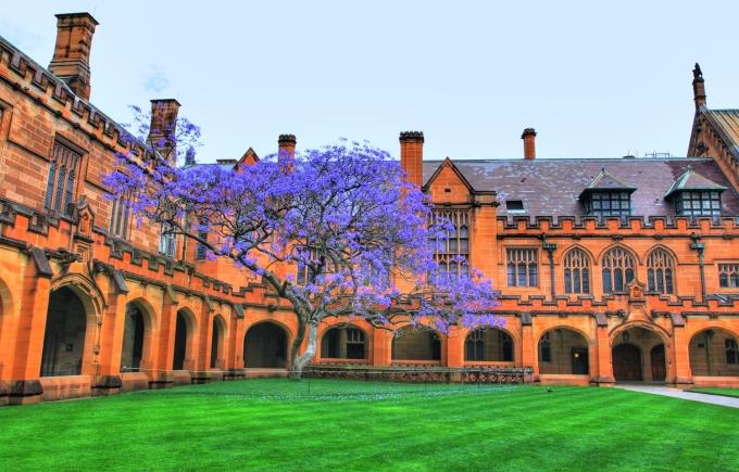 Phượng tím trong Đại học Sydney
